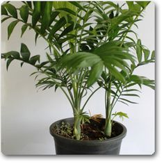Natural Plants Online At Nursery Live