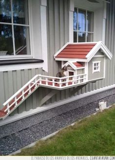 Why is using a dog house a good idea? Most people tend to have the misconception that dog houses are meant for only those dog owners who intend to keep their dogs outside. Niche Chat, Future House, My House, Outdoor Cats, Outdoor Decor, Cat House Outdoor, Outside Cat House, Outdoor Cat Shelter, Indoor Outdoor