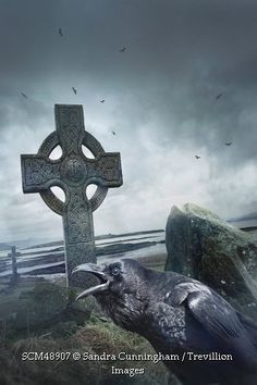 Trevillion Images - crow-calling-by-celtic-cross-gravestones