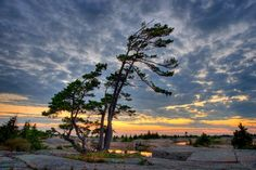 *🇨🇦 Windswept pines (Georgian Bay, Ontario) [old Panoramio photo] 🌅 Landscape Photos, Landscape Paintings, Landscape Photography, Landscapes, Watercolor Landscape, Watercolor Paintings, Tattoo Watercolor, Nature Pictures, Beautiful Pictures