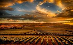 Red Mountain is the bench at the eastern end of the Yakima Valley and is one of the warmest regions of the vast and arid Columbia Valley. It has developed into one of the premium grape growing regions in the Northwest. #WAwine #Wine #YakimaValley #RedMTN