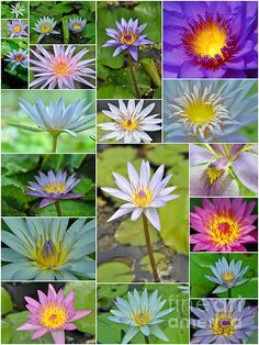 """Water Lillies Collage""         by Allen Beatty"