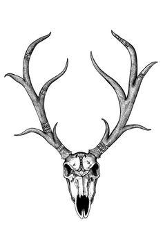 deer skull drawings | CafePress > Wall Art > Posters > European ...