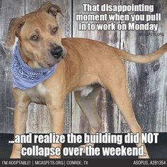 Nope... stiiiiiiill there.  #Mondays #MondayProblems #mcaspets