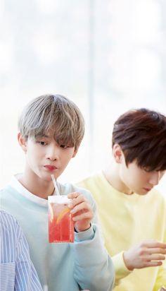 Wanna One x Innisfree: Wanna One Go in Jeju Bae Jinyoung and Hwang Minhyun Wallpaper