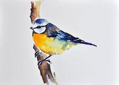 Oiseau d'aquarelle originale peinture Mésange bleue, jaune et bleu oiseau 6 x 8 pouces