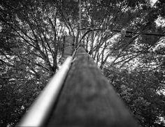 ARTIFITIAL TREE. Villa del Carbón 2016