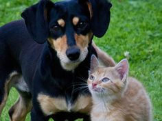 Love your furry friend but want to tread lightly on the earth? Here are the best pet care tips for eco friendly pet owners. Pet care tips for green living! Pet Shop, Top Dog Breeds, Pet Care Tips, Pet Health, Mental Health, Cat Food, Pets, Dog Training, Training Collar