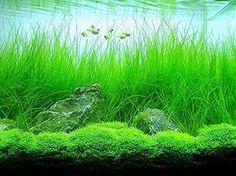 We can offer you many species of live aquarium plants. You will be able to design and create your own unique aquarium world filled with green plants. & Aquatic Glow offer aquarium led lighting aquarium light hanging ... azcodes.com