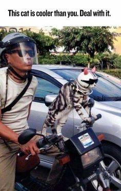 Coolest cat ever