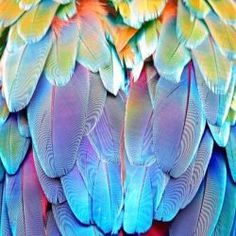 When you experience the beauty within your own heart, you will then see it in others and in all things. Parrot Feather, Feather Art, Canvas Art, Canvas Prints, Canvas Size, Caran D'ache, Contemporary Wall Art, Bird Feathers, Colorful Feathers