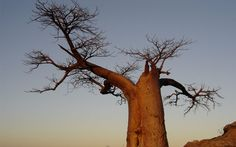 Land of the giant's   Tuli block - Botswana