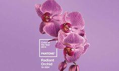 PANTONE Color of the Year 2014 Radiant Orchid Graphics - Radiant Orchid - Pantone Color of the Year - Color trends, color palettes , Pantone TCX.<br> PANTONE Color of the Year 2014 Radiant Orchid symbolizes renewal. Composition D'image, Orchid Color, Fuchsia, Purple Ombre, Purple Nails, Blog Deco, Grafik Design, Color Of The Year, Shades Of Purple
