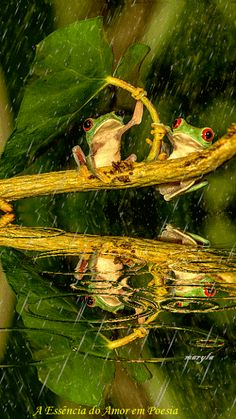 Bwrw Glaw: Free animated frogs in the rain mobile wallpaper by on Tehkseven Foto Gif, Gif Photo, Photo Art, Sapo Meme, Animals And Pets, Cute Animals, Rain Gif, I Love Rain, Tree Frogs