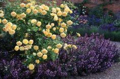 Capítulo 3 - Usos paisajísticos y combinaciones de rosales con otras plantas - INFOJARDIN