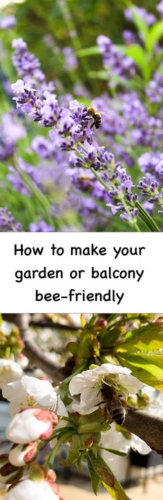 Want to do something good and help save the bees? We have some tips on how to make your garden or balcony more bee-friendly and thus a welcoming place for bees!