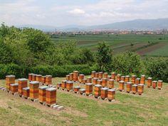Multipe Hives
