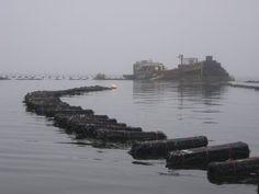oyster farm, Morro Bay