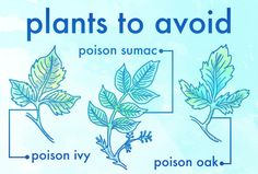 And finally, get familiar with these poisonous plants so you don't get screwed.