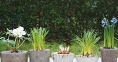 Crea tus propias macetas de concreto | Ideas para Decoracion