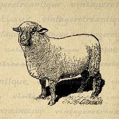 Digital Printable Antique Sheep Image Farm Animal Download Graphic Vintage Clip Art Jpg Png Eps 18x18 HQ 300dpi No.3187 @ vintageretroantique.etsy.com #DigitalArt #Printable #Art #VintageRetroAntique #Digital #Clipart #Download