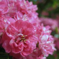 Choosing Plants for Clay Soil Trees and Shrubs
