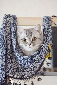 How do you like my new scarf?