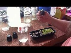 Making Your Own Hydroponic Nutrients - YouTube