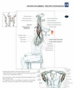 Seated Dumbbell Extensions