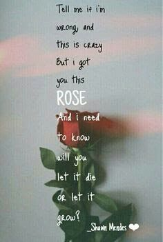 Roses | Shawn Mendes