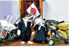 かわいいペットの写真: なめ猫 - GP03