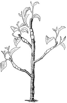 Branches being grafted on! YES. This is part of my tattoo idea...
