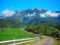 Desa Cattle Dairy Farm Kundasang Seakan berada di New Zealand! - Sabahup2date