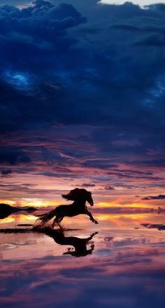 Reflections Horse On A Beach At Sunset