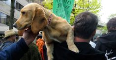 CARSON CITY, Nev. Pets might soon be able to use pot under a bill introduced Tuesday in the Nevada Legislature. Democratic Sen. Tick Segerblom is sponsoring the measure that would allow animal owners to get marijuana for their pet if a veterinarian certifies the animal has an illness that might be alleviated by the drug. See also: Once upon a time, weed was a no-no. Now it's your next 9-to-5. Segerblom said he's concerned that some animals might
