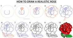 Step 1. The easiest way to begin sketching a rose is to make a fancy style S that has a curled in tip at the top. Step 2. When you start sketching out the rose petals, you can begin to see how the S actually forms the base of the rose bud or center part of the rose bloom. Sketch in some nice