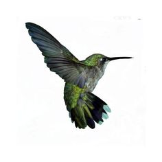 Humming Bird The World's Smallest Bird In Different Colors ❤ liked on Polyvore featuring home, home decor, birds, animals, backgrounds, green, decorations, bird home decor and green home decor