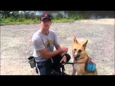 Our Favorite Tools for High Energy Dogs! - Via @DierkingsDogs Dog Training and Dog Tools!