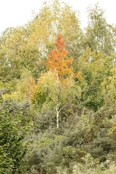 'Herbstlicher Wald' von toeffelshop bei artflakes.com als Poster oder Kunstdruck $17.33