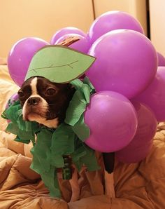 "Why does the human keep laughing and saying I look ""grape""?"