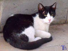 Gato blanco y negro by ToniTeror.deviantart.com on @deviantART