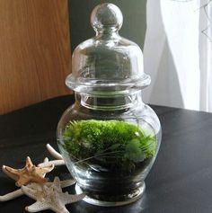 Terranium...gona do some of these this summer/ spring