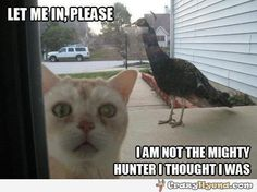 Funny bird can make the cat look ridiculously scared