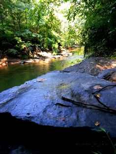 """""""She was free in her wildness. She was a wanderess, a drop of free water. She belonged to no man and to no city."""" ~Roman Payne  [#Photo: A scenic respite at the Patapsco River.]  #quote #photography #art #design #landscape #trees #plants #water #river #nature #outdoors #Patapsco #Maryland #scenic #forest #water #hiking"""