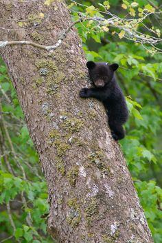 Cute little tree hugger bear