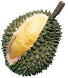 """The Durian defies explanation: but Weird Food has attempted to describe this foul, yet religiously revered fruit that is simultaneously adored…and banned from public spaces. """"A fruit as big as a football, covered with tough spiky skin. The pulp is pale yellow, with shape and consistency of raw brains. Smell has been compared to rotting flesh, old gym socks, or sewage. www.greennutrilabs.com"""