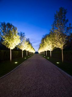 Outdoor Pathway Lined With Trees