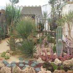 jardin sec wwwmonjardin materrassecom - Jardin Sec