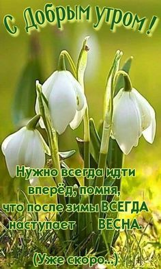Good Morning, Quotes, Buen Dia, Bonjour, Good Morning Wishes