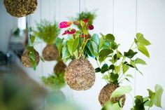 Hanging #gardens suspended from ceiling. Luv.